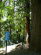 Kugami16_3